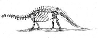 A brontosaurus diagram from the 1880s. Factually inaccurate.